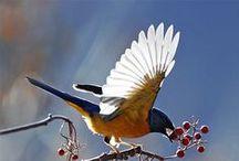 Birds and Birds-House