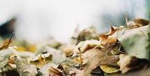 Autumn. November