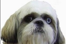 Hondensalon Wolvers / Onze website, boordevol informatie over onze trimsalon