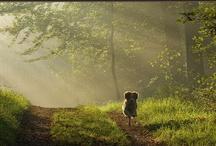 Op pad met de hond / Hotels, bungalows, bossen en meer waar de hond welkom is.