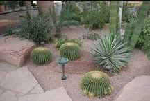 Forecourt Succulents Garden