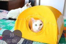 Kitty Stuff / spoiling the furry children