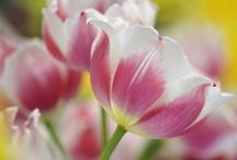 Spring Gift♥