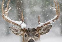 L'hiver , la neige . . .