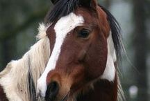 Horses / Horses and equine supplies.