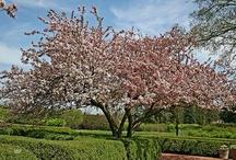 "Landscape Trees 2"" Caliper / by Natural Design Landscape"