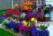 Flowers, Gardening and Outdoor Decorating / by Patty Bolin