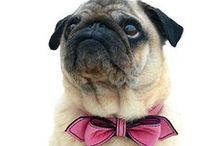 Pawesome Pet Products / Cool, interesting, and helpful pet products for your furry friend