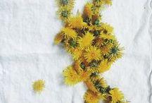 mes fleurs  / by Mimi Lumière Stellaire