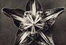 Botanicals / by Mimi Lumière Stellaire
