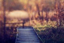 Etc | autumn