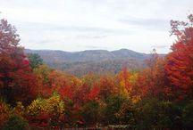 Fall  Harvest / by Mindy Scott