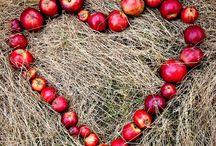 Hearts ❤️ / by Mindy Scott