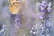 Lovely Lavender / by Mindy Scott
