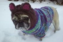 Pets in Sweaters / Because pets get cold too an animals in sweaters are adorable.