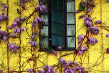 Beautiful Windows and Doors / by Cat Z
