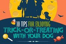 Pet Safety / Tips for keeping your pets safe in the car, around home, while traveling, etc.
