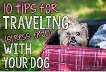 Pet Friendly Travel / Travel is better with pets. Here are some dog friendly places to go and tips for safer, more enjoyable travel with your dog or cat.
