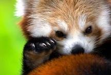 Cute: Animals