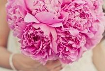 Wedding Inspiration / Wedding Lace Dresses, Engagement Rings,  Wedding Locations & Flowers