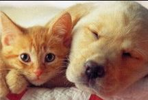 Puppies/Kitties / by Kathy Henry