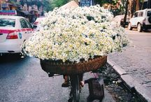 flowers °