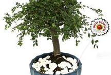 Bonsai Trees / Any day is a great day to order a bonsai tree for someone special. Enjoy a large selection, easy online ordering, and fast delivery from Melis Flowers. Bonsai trees and tropical plants make great gifts for just about anyone. Melis Flowers makes it easy to send a bonsai tree as a unique gift. Order today!