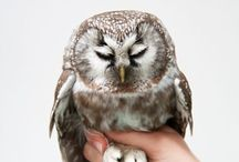 Owls And Winter
