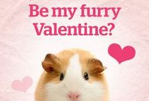 Pet & Pet Lover Valentines / Celebrate the #pet or pet parent in your life with these fun pet-centric #Valentines