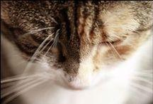 """♥ Katzen / 4 weiche Pfoten & immer ein freundliches """"Miau"""" parat!"""