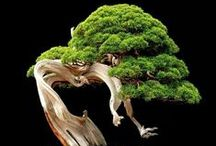 Bonsai / Árboles / by MMCL