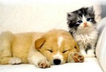 Țᅢᄐ Ϻᄐᄋ₩ ᄁ' ₩ᄋᄋԲ ҌᄋΔЯd / cute pictures of cats and dogs....