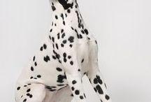 future dog - Dalmatian
