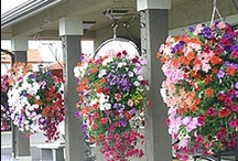 Hanging Baskets Ideas
