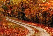 Autumn / by Dana Crossland