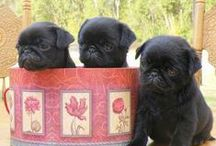 Pets [pugs] / PUGS. And other animals that pull my heartstrings <3 / by Kate Auger