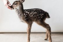 animals <3 / Cuteness overload