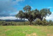 Extremadura (Spain)