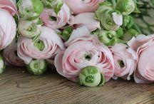 floral/plants.
