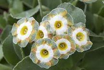 petal / by clarissa saunders