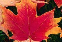 Autumn Activities / Arts, crafts and play ideas to celebrate the autumn season.
