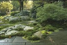 gorgeous gardens / Low maintenance high impact , creating focal points and indigenous gardening.
