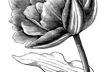 FLORA / Flower power.