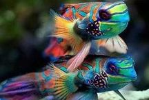 Colourful Birds & Fish