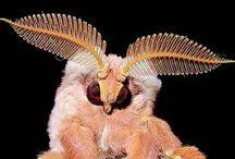 Moths are cute ♡