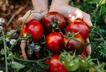 Vegetables I wanna grow too! / Great photos of growing vegetables