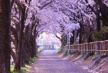 Japan / Planning for Japan trip 2017