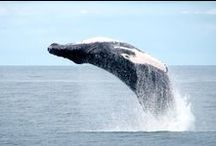 Whale Watching Reykjavik / Pictures from our whale watching tours!