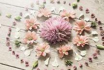  Floral & Vegetal compo 