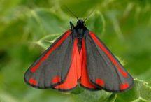 Amazing moths